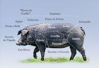 Pig anatomy chart